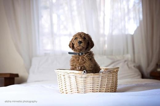 """Chú chó Humphry bất ngờ trở thành """"thành viên mới"""" của gia đình"""