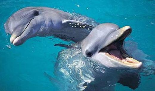 Rơi nước mắt nhìn cá heo mẹ tuyệt vọng vì không cứu được con