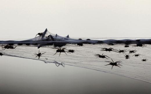 Kinh hãi trước cảnh ngôi làng bị hàng triệu con nhện tấn công