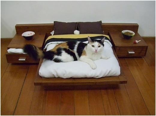 """Một nàng mèo """"sặc mùi quý tộc"""" đang nghỉ ngơi trên giường nệm với thức ăn ở cả hai bên."""
