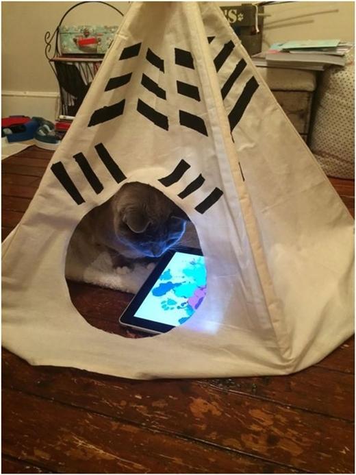 """Mèo mà cũng được """"lướt"""" Ipad?"""