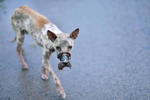Những vụ ngược đãi động vật ghê rợn khiến cư dân mạng phẫn nộ