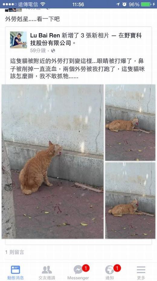 Lại thêm chú mèo bị hành hạ dã man khiến dư luận giận sôi máu