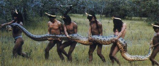 """""""Hồn vía lên mây"""" trước những con rắn lớn nhất thế giới"""