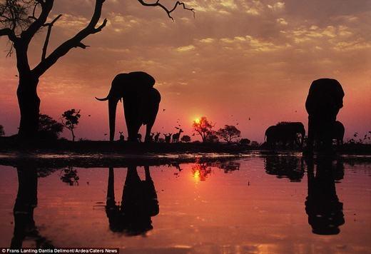 Những chú voi trên đồng cỏ.