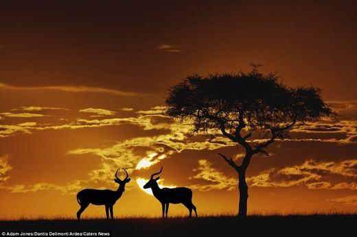 Hai chú hươu tạo nên khung cảnh nên thơ lúc chiều tà.