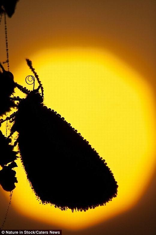Một chú bướm trên mình đầy những giọt nước, và nó thật tuyệt vời khi được thể hiện dưới ánh mặt trời lúc hoàng hôn.