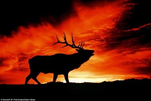 Ấn tượng trước loạt ảnh hoàng hôn tuyệt đẹp ở thế giới động vật