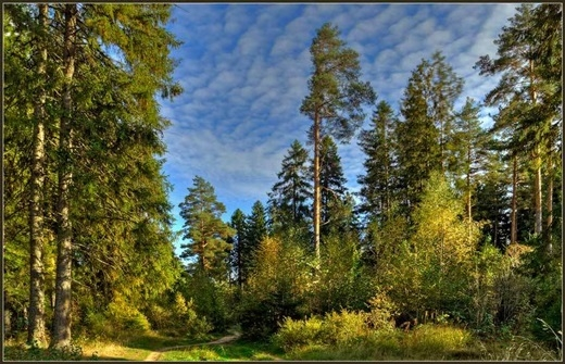 Nga – lá phổi của thế giới. Với những cánh rừng rộng bạt ngàn như bất tận của Siberia, Nga cung cấp phần lớn lượng oxi cho Trái đất.