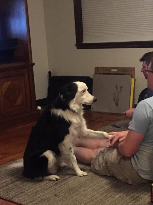 """Nhận thấy không khí đang trở nên căng thẳng, chú chó bèn chạm tay chủ như một hành động an ủi:""""Ê này, ổn không ông bạn?"""""""