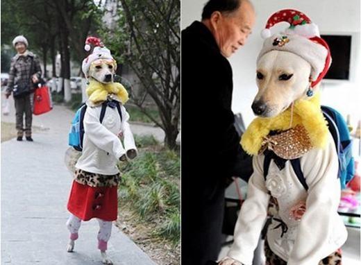 Có lẽ đây là quý cô chó sành điệu nhất thế giới chăng?