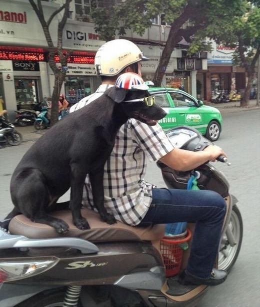 Chú chó thời trang nhất vịnh Bắc Bộ đây rồi!