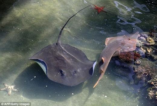 Bất ngờ loài cá không thay hình đổi dạng sau hàng triệu năm xuất hiện