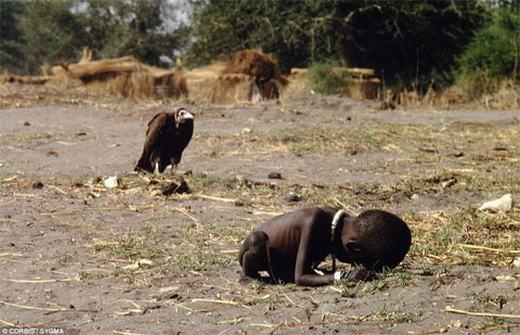 Hình ảnh ghi lại cảnh con kền kền – loại động vật ăn xác thối – như đang kiên nhẫn chờ đợi con mồi đã gây chấn động dư luận thời gian đó. Và tác giả của bức ảnh này cũng đã phải chịu nhiều sự dày vò, trách móc khi có thể lạnh lùng ghi lại khoảnh khắc đáng sợ này. Thế nhưng, một sự thật không thể phủ nhận chính là: sự tàn khốc của nạn đói tại Sudan đã được khắc họa một cách rõ ràng đến xót xa.