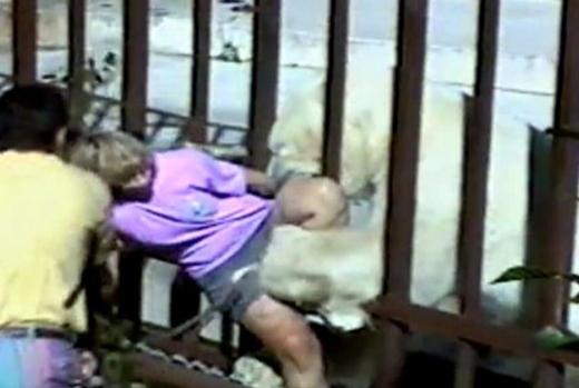 Gấu Bắc Cực Binky (Sở thú Alaska, Anchorage, Alaska, Mỹ): Du khách người Australia, Kathryn Warburton, leo qua hai hàng rào bảo vệ để chụp ảnh Binky, một chú gấu Bắc Cực nặng gần 550 kg. Con gấu thò đầu qua song chuồng và ngoạm được cô. Warburton bị gẫy chân. Cô đã mất mạng nếu không có các du khách nhanh trí dùng cành cây xua Binky lùi lại. Ảnh: New York Post.