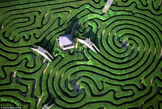 Được tạo hình từ 16.000 cây thanh tùng, mê cung Longleat, Wiltshire, Anh thật nổi bật khi chụp từ không trung. (Ảnh: Internet)