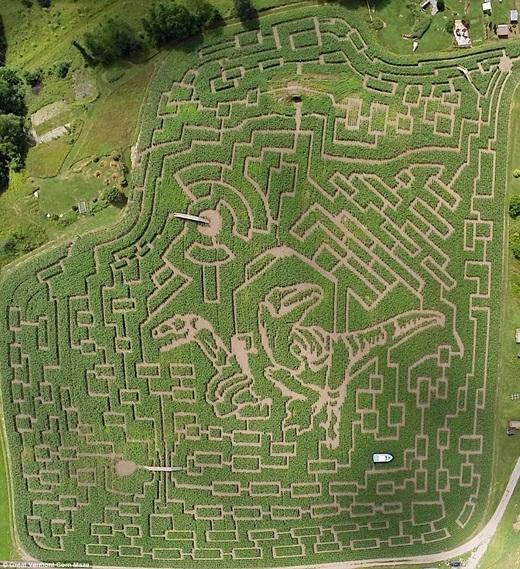 """Đến với mê cung Great Vermont Corn, Bắc Danville, Vermont, hãy chuẩn bị tinh thần để chạy khỏi chú khủng long ở trung tâm mê cung đi nhé. Để """"xử lí"""" xong công trìnhnày, bạn sẽ tốn khoảng 3 tiếng đồng hồ căng não đấy."""