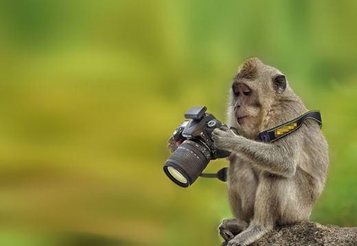 Có lẽ nghề nhiếp ảnh được nhiều động vật lựa chọn nhỉ?(Ảnh: Internet)