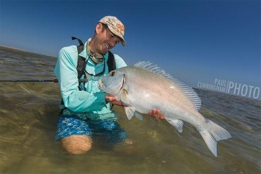 Blue Bastard được phát hiện nhiều ở phía Bắc nước Úc. Kẻ thù của chúng là cá sấu nước mặn và cá mập. (Ảnh: Internet)