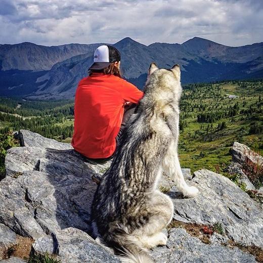 Một số hình ảnh về hành trình của chú chó lai sói Loki.