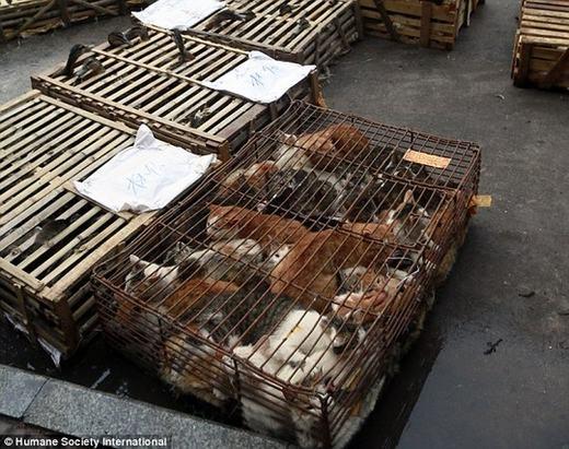 Những chú mèo bị bắt nhốt. (Ảnh: HSI)