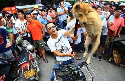 Sốc: Sát hại toàn bộ chó mèo để… bảo vệ môi trường