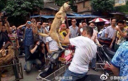 Một thanh niên ngược đãi chó giữa phố đông người. (Ảnh: Weibo)