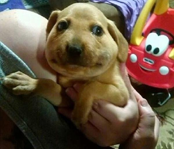 Khuôn mặt sưng như cái bánh bao của chú chó này đã cho thấy hậu quả nhãn tiền khi trêu ong.