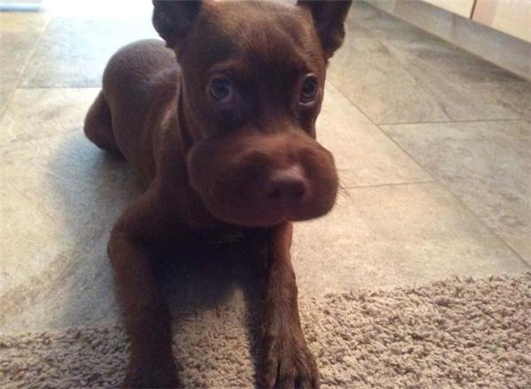 Ánh mắt sợ hãi của chú chó này cho thấy chú ta sẽ không bao giờ dám động vào loài ong nữa.