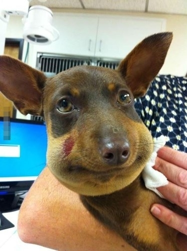 Chú chó tội nghiệp được một bài học nhớ đời khi trêu ong.