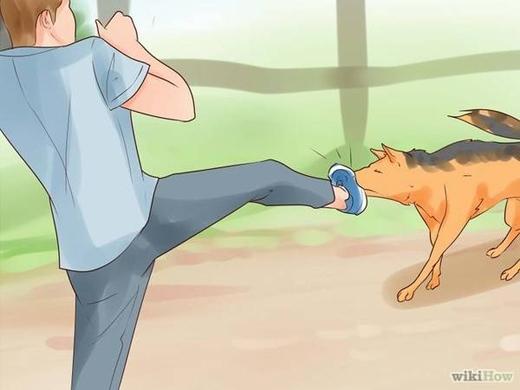 Khi bị tấn công, hãy tìm cách chống trả. Tấn công vào những điểm yếu như mũi, cổ họng, gáy… sẽ khiến chó chùn bước