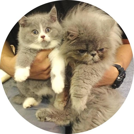 Được biết hai em mèo dễ thương này đã được Chi Pu nuôi hơn một năm rưỡi. - Tin sao Viet - Tin tuc sao Viet - Scandal sao Viet - Tin tuc cua Sao - Tin cua Sao
