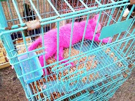Pinky nằm trong lồng sắt chỉ với một chút nước uống.
