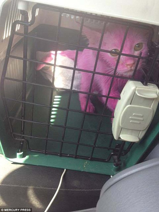 Hiện màu lông hồng của Pinky vẫn chưa phai hết.