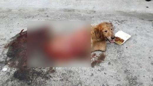 Chú chó bị thương rất nặng ở lưng.
