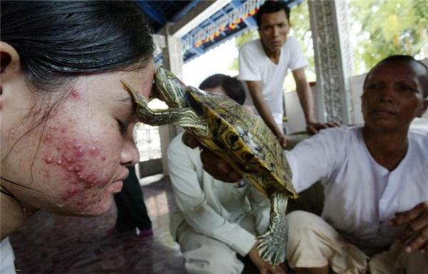 Cảnh chữa bệnh bằng … rùa ở Campuchia. Người dân ở đây tin vào sức mạnh siêu nhiên của các con vật như rùa, bò hay rắn sẽ giúp họ chữa được bệnh chỉ bằng cách tiếp xúc với chúng.