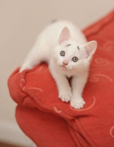 """""""Chú mèo lo lắng"""" đang thu hút sự quan tâm của cộng đồng mạng."""