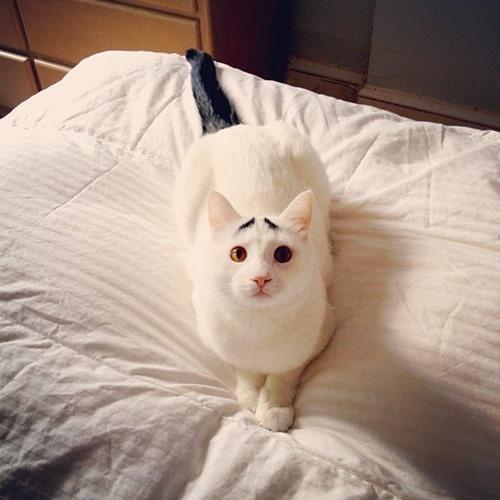 Tan chảy với chú mèo có đôi lông mày lo lắng