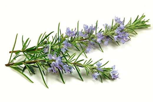 Hương thảo có thể giúp bệnh nhân ung thư giải độc, chữa chứng đầy hơi, khó tiêu và các vấn đề tiêu hoá khác. Hãy uống 3 tách trà hương thảo hàng ngày để tăng cảm giác ngon miệng. Ảnh:Marcjgian