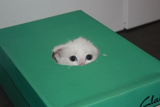 Kế đến, các chú mèo có thể biến mất mà không để lại một dấu vết nào trong vài giờ liền.(Ảnh: Internet)