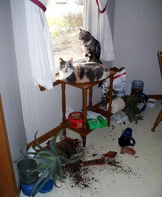 Loài mèo xem thế giới chỉlà sân chơi của chúng.(Ảnh: Internet)