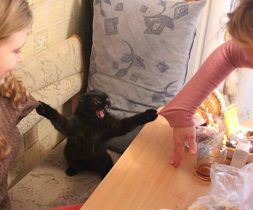 Giang sơn dễ đổi nhưng bản tính loài mèo hung dữ thì khó dời.(Ảnh: Internet)
