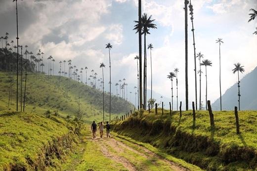 Tản bộ giữa rừng cọ xanh mướtở Colombia trong một buổi sáng đẹp trời mùa thu là sở thích của Instagrammer chaseteron(Nguồn IG @chaseteron)