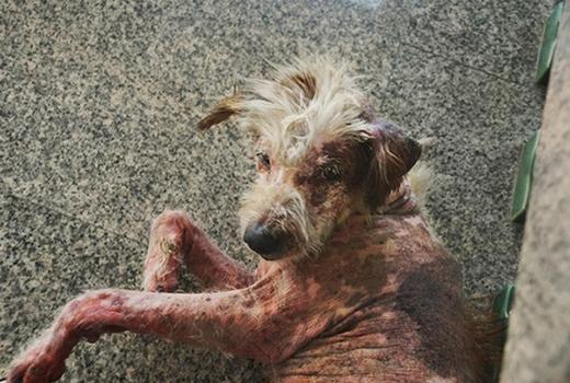 Các bạn trẻ trên mạng xã hội liên tục chia sẻ hình ảnh chú chó để truyền đi thông điệp kêu gọimọi người cùng chung tayđón nhận những chú chótội nghiệp bị bỏ rơi. (Ảnh: Internet)