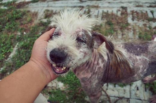 Những bước chuyển mình đáng kinh ngạc của chú chó chỉ sau 2 tháng được nhận nuôi.(Ảnh: Internet)
