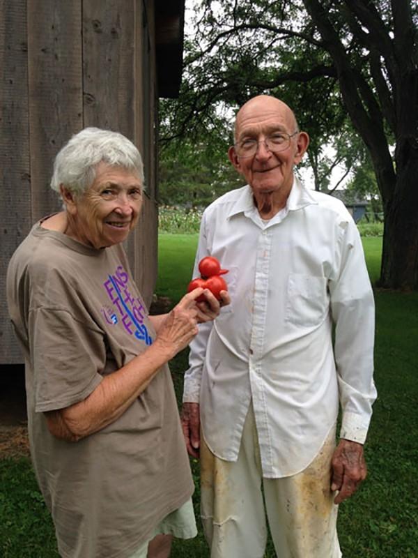 Ông bà Davidek hi vọng sẽ sớm tìm được cách trồng những quả cà chua có hình vịt như thế này.