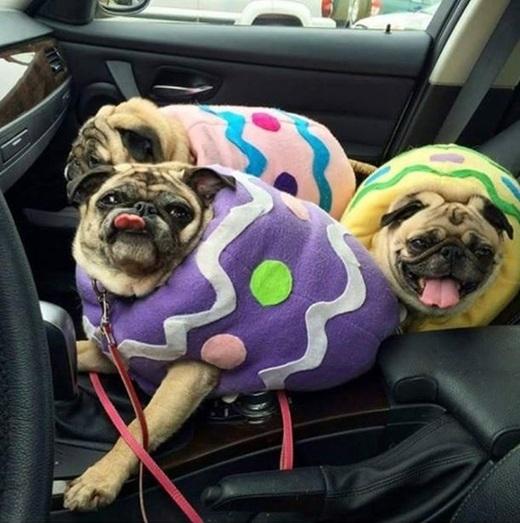 """""""Chúng em là những viên kẹo ngọt ngào và nhăn nhúm"""". (Nguồn: Internet)"""
