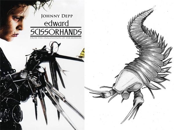 Vài năm trước, các nhà khoa học đã phát hiện ra hóa thạch của một sinh vật thời cổ đại và quyết định đặt tên theo nam diễn viên Johnny Depp. Sinh vật này có tên là Kootenichela deppi, tồn tại cách đây 505 triệu năm và là tổ tiên của bọ cạp, tôm hùm. Sở dĩ Johnny Depp được chọn đặt tên cho loài vật có vuốt sắc nhọn giống như chiếc kéo này là bởi anh từng đóng vai Edward Scissorhands trong bộ phim Người Tay Kéonăm 1990.