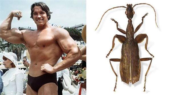 Tên của diễn viên điện ảnh Arnold Schwarzenegger được dùng để đặt cho Agra schwarzeneggeri - một loài bọ cánh cứng ở Costa Rica.