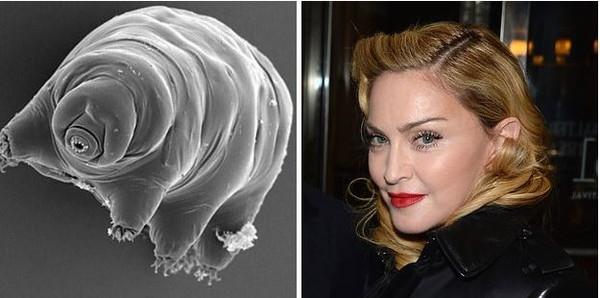 Người ta đã dùng tên của Madonna để đặt cho Echiniscus madonnae, một loài động vật có kích thước hiển vi sống dưới nước.